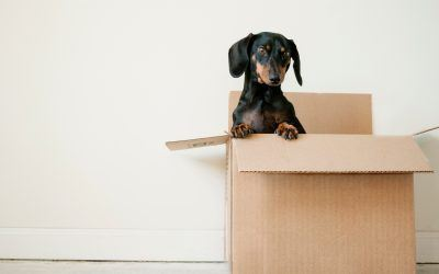 Shopping for Littleton, CO Homes for Sale? Use this Moving Checklist to Prepare
